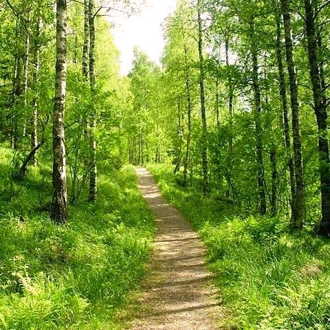 BTBY-forest